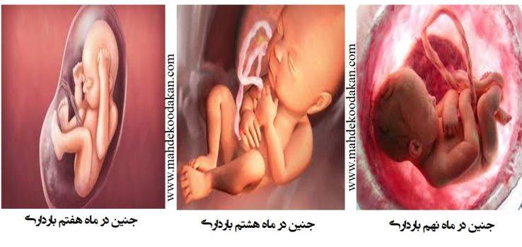 ماهه سوم2 738x349 - سه ماهه سوم بارداری: تغییرات در جنين، مادر و پدر