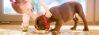 فواید و اصول نگهداری از حیوانات در مهد کودک